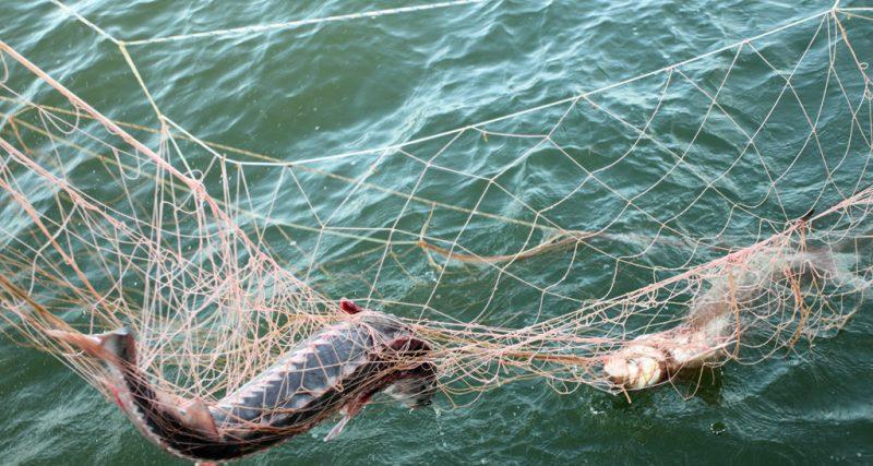 Зловмисники сплатять 120 тис грн за незаконний вилов риби