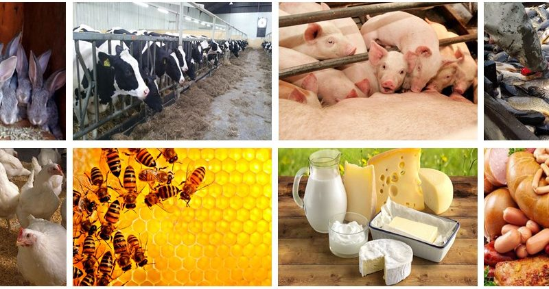 Про надходження продукції тваринництва на переробні підприємства Хмельницької області в січні–вересні 2018 року