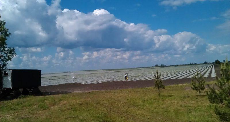 Регіональний офіс водних ресурсів провів моніторинг меліорованих земель