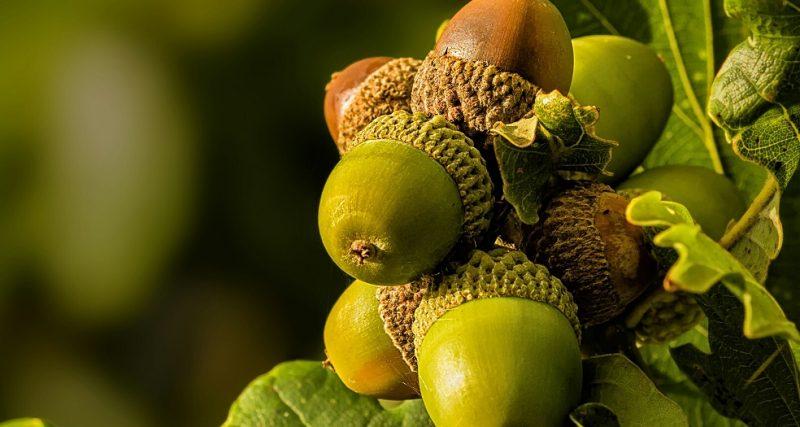 Якісне насіння – основа майбутнього продуктивного лісу