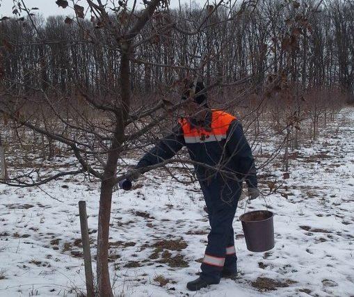 Ярмолинецький лісгосп: лісівники доглядають за зимовим садом
