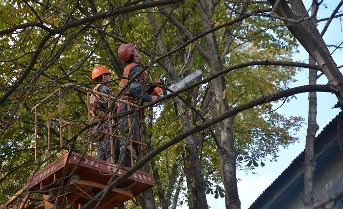 У Хмельницькому обмежать рух транспорту через обрізку дерев