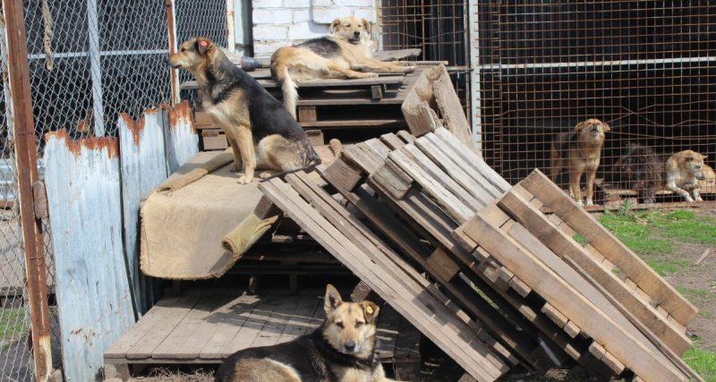 Собаче життя: як у Хмельницькому вирішують проблему безпритульних тварин?
